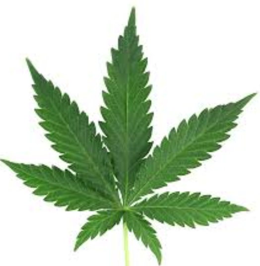 cannabis domain names for sale lease jv partnership